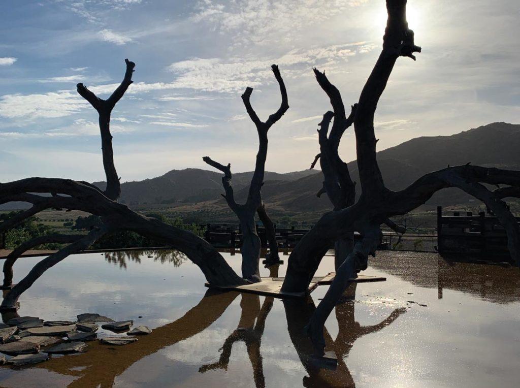 Bruma Valle de Guadalupe tree