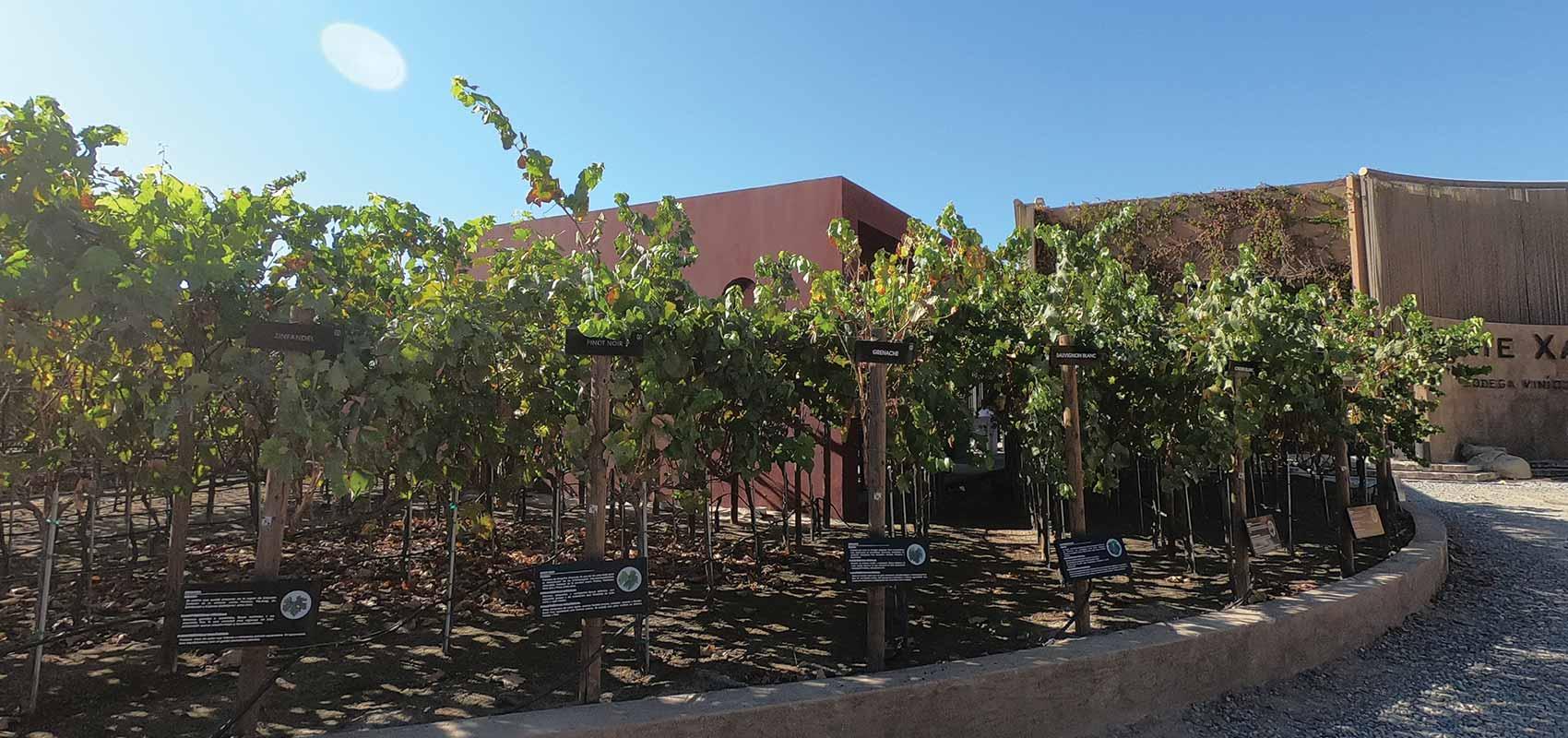 Monte Xanic Vineyard
