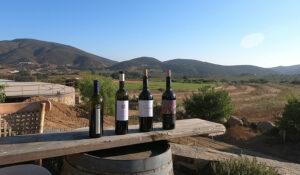 Bodegas Santo Tomas wines