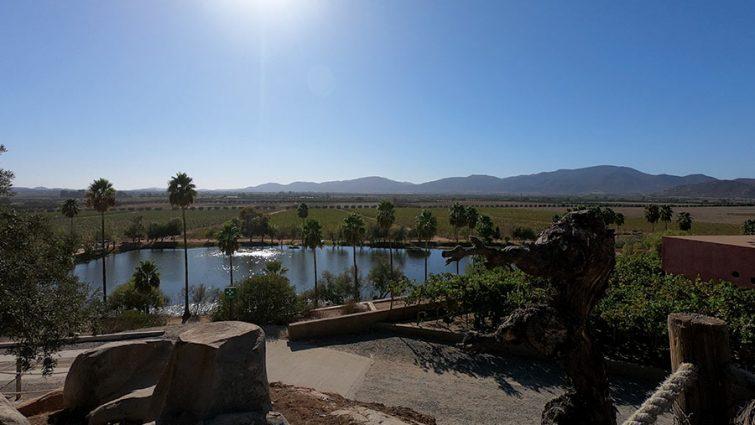 Monte Xanic vineyard views